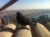 Die berühmte Taube auf dem Dach ;-)